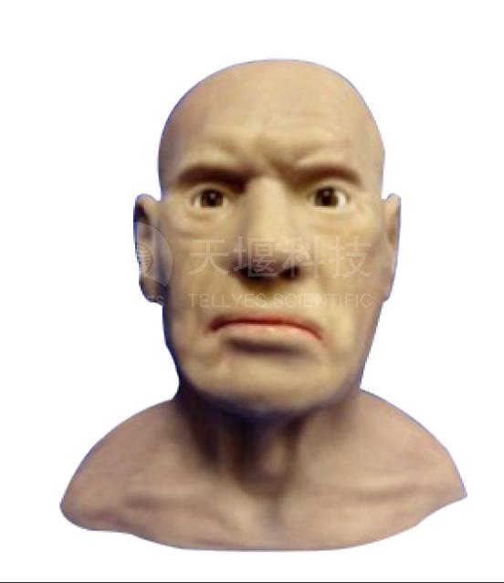 基础版皮瓣修复及缝合手术训练头部模型