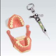 儿童口腔麻醉训练模型