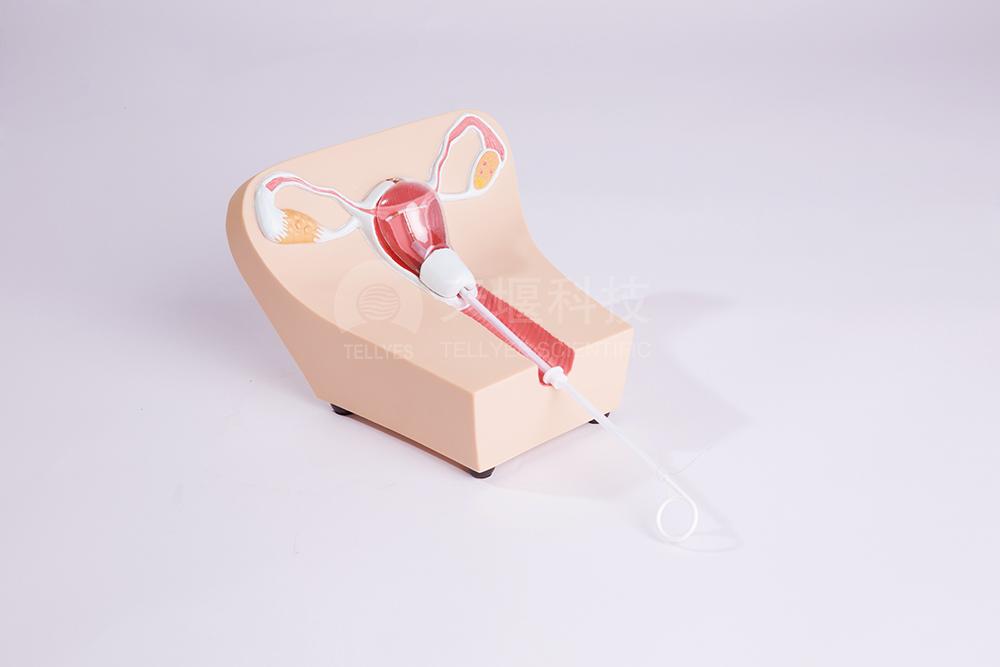 宫内避孕器训练模型Ⅰ