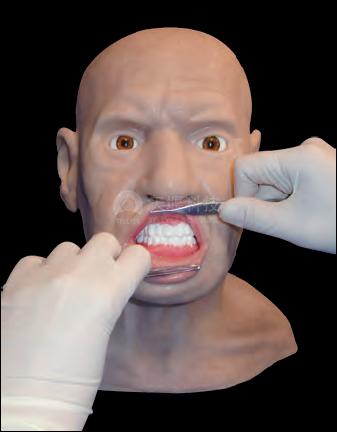 高级版皮瓣修复及缝合手术训练头部模型